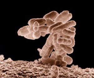 Coliform in well water